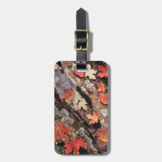 Utah, Zion National Park, Patterns of autumn Luggage Tag