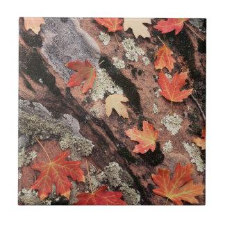 Utah, Zion National Park, Patterns of autumn Tile