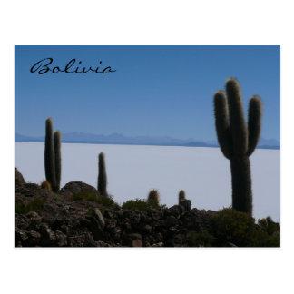 uyuni cacti bolivia postcard