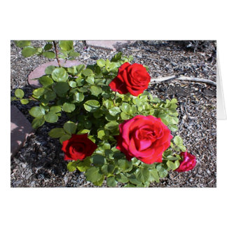 Valentine for a Bereaved Husband or Wife Greeting Card
