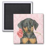Valentine Rose Doberman Square Magnet