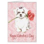 Valentine Rose Maltese Cards