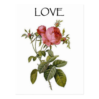 Valentine Vintage Rose Flower_Art Love Postcards