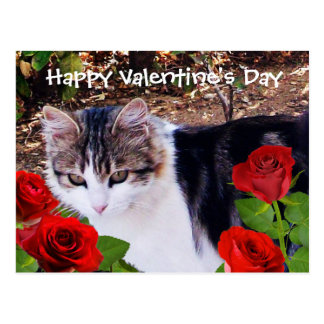 VALENTINE'S DAY CAT WITH RED ROSES POSTCARDS