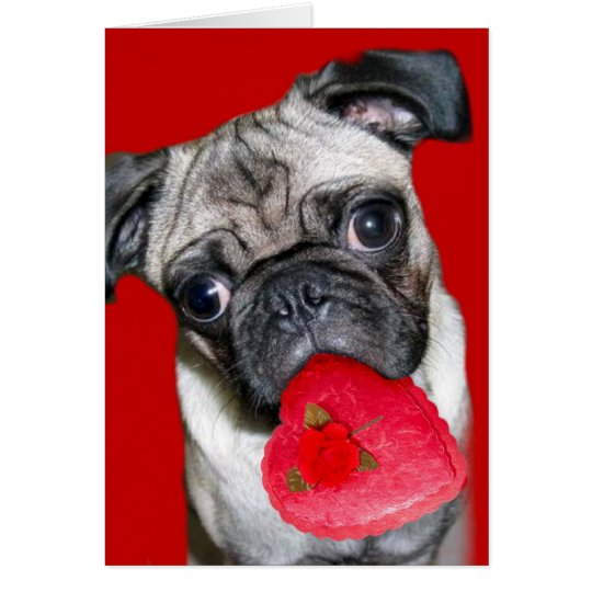 Valentine's Day pug greeting card