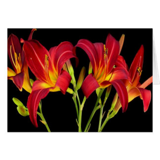 Valentine's Exotic Flower Romance Sensual Gifts Greeting Card