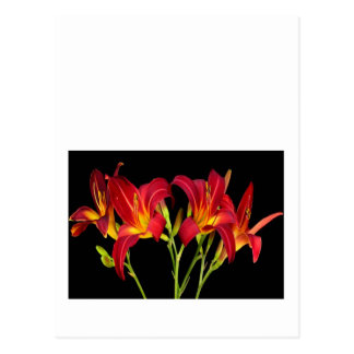 Valentine's Exotic Flower Romance Sensual Gifts Postcard