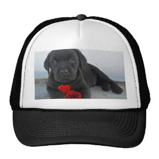 Valentine's Labrador puppy Cap