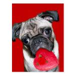 Valentine's pug postcard