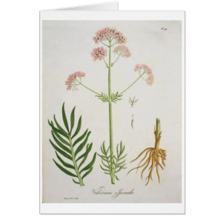 Valerian from 'Phytographie Medicale' by Joseph Ro Greeting Card