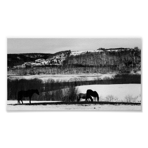 Valley Horses Poster