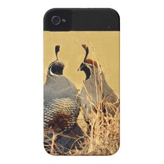 Valley Quail (California) iPhone 4 Cover