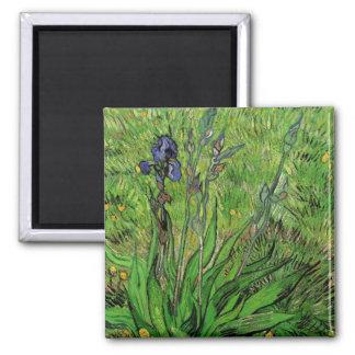 Van Gogh Iris, Vintage Garden Fine Art Flowers Square Magnet