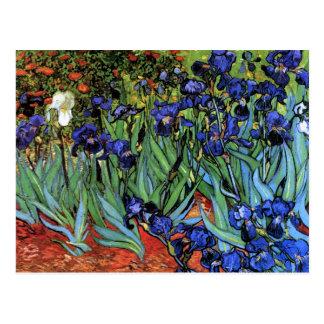 Van Gogh Irises (F608) Vintage Fine Art Postcard
