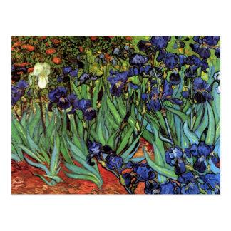Van Gogh Irises, Vintage Garden Fine Art Postcard