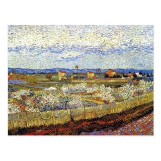 Van Gogh - La Crau With Peach Trees In Blossom Postcard