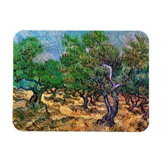 Van Gogh - Olive Grove Rectangular Photo Magnet