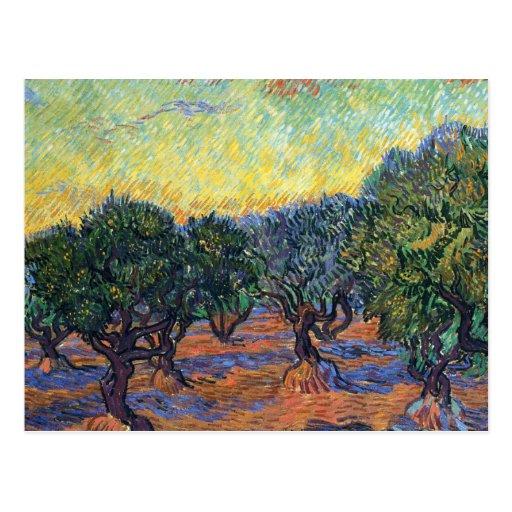 Van Gogh Olive Grove with Orange Sky Post Card