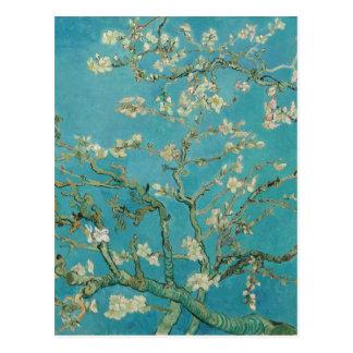 Van gogh's Almond Blossom Postcard