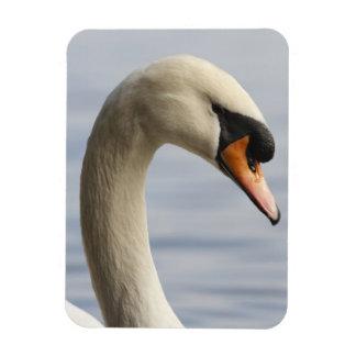 Vancouver, Stanley Park, Mute Swan (Cygnus olor) 2 Rectangular Photo Magnet
