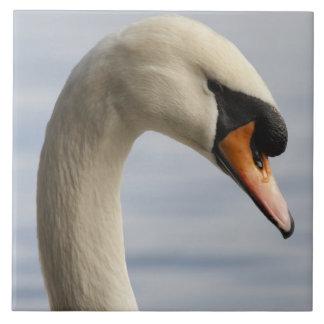 Vancouver, Stanley Park, Mute Swan (Cygnus olor) 2 Tile