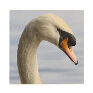 Vancouver, Stanley Park, Mute Swan (Cygnus olor) 2 Wood Coaster
