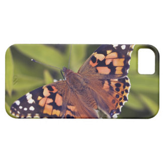 vanessa cardui - Europe, Germany, Bavaria, Barely There iPhone 5 Case