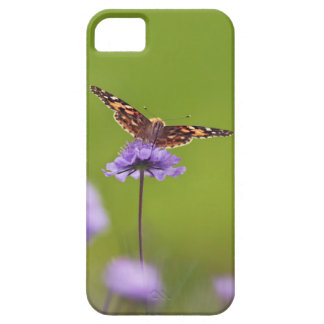 vanessa cardui - Europe, Germany, Bavaria, iPhone 5 Cases