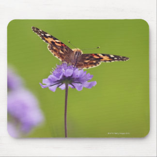 vanessa cardui - Europe, Germany, Bavaria, Mouse Pad
