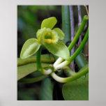 Vanilla Orchid Poster