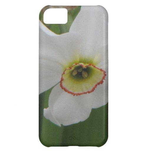 Vanity iPhone 5C Cover