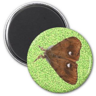 Vapourer Moth Magnet