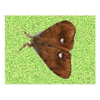 Vapourer Moth Postcard