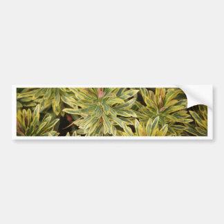 Vareigated Plant Design Bumper Sticker
