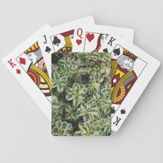 Variegated Bush playing cards