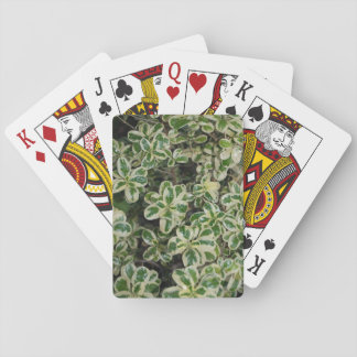 Variegated Bush playing cards