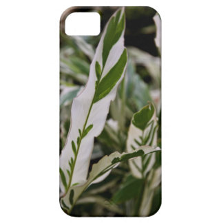 Variegated Ginger Case-Mate iPhone 5 Barely There iPhone 5 Covers