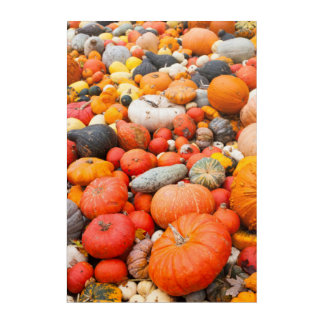 Variety of squash for sale, Germany Acrylic Wall Art