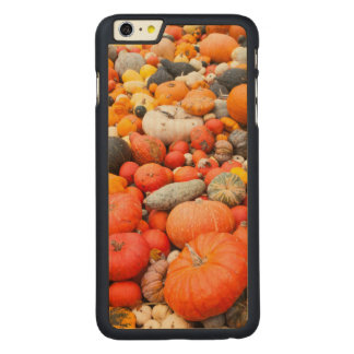 Variety of squash for sale, Germany Carved Maple iPhone 6 Plus Case