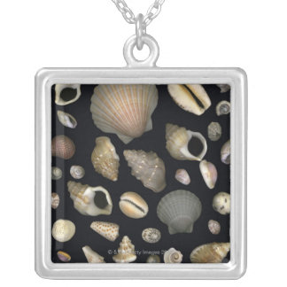 Various sea shells silver plated necklace
