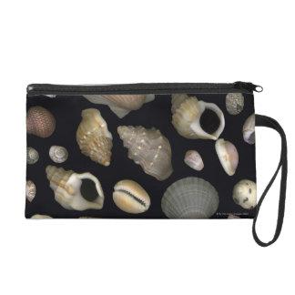 Various sea shells wristlet