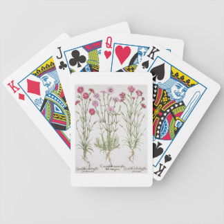 Various varieties of Dianthus, from the 'Hortus Ey Bicycle Playing Cards