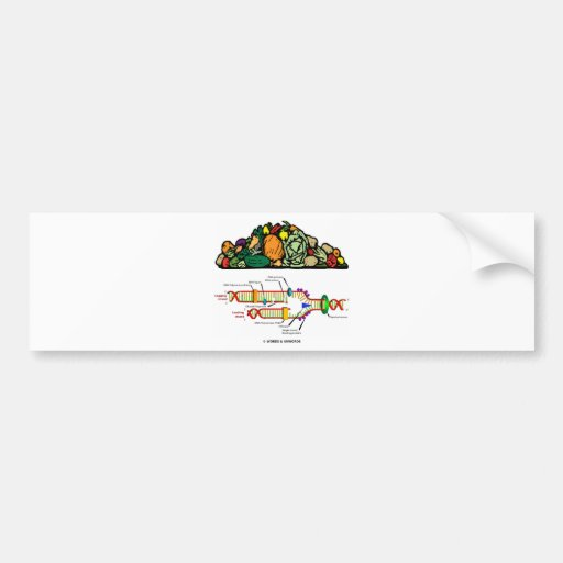 Vegetarian DNA (Pile Of Vegetables Vegetarian) Bumper Sticker