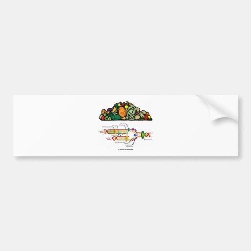 Vegetarian DNA (Vegetarian Attitude) Bumper Sticker