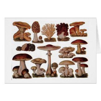 Vegetarian hipster steampunk vintage mushroom card