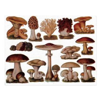 Vegetarian hipster steampunk vintage mushroom postcard