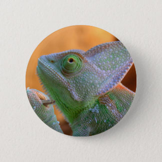 Veiled Chameleon 6 Cm Round Badge