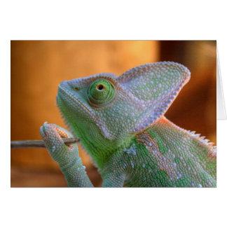 Veiled Chameleon Card