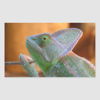 Veiled Chameleon Rectangular Sticker