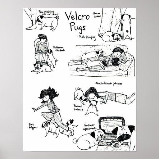 Velcro Pugs Posters